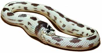 http://www.abcdetc.com/bcomme/wp-content/uploads/2008/07/serpent-qui-se-mord-la-queue.jpg